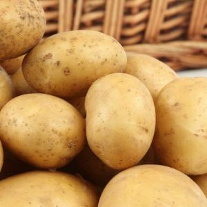 """Семенной картофель """"Саванна"""" Голландия (1 репродукция)"""