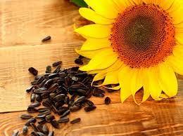 насіння соняшника