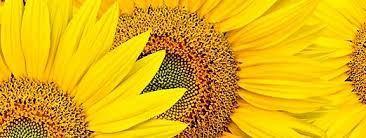 насіння соняшника - широкий асортимент