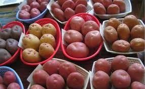 семеной картофель