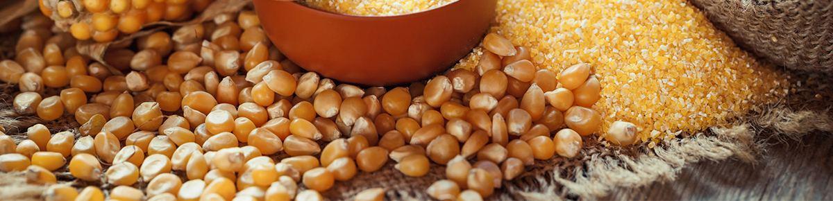 семена оптом - кукуруза