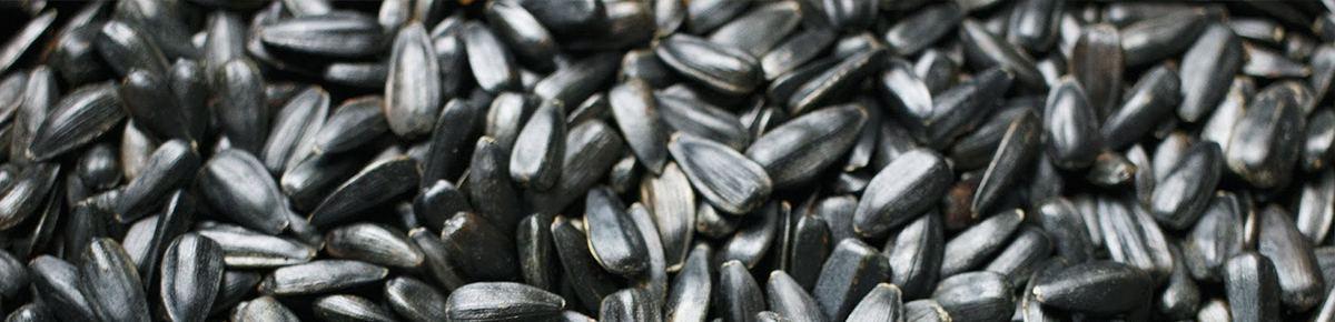 семена от поставщика - подсолнечник