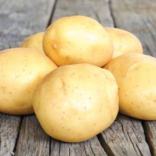 """Семенной картофель  """"Аризона"""" Голландия  (1 репродукция)"""