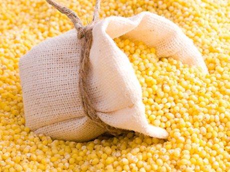 посевмат кукурузы