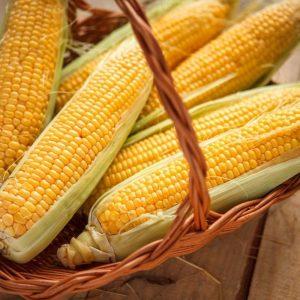 Популярность для посева семян кукурузы