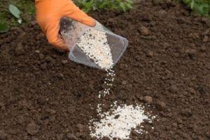 значение микроэлементов для кукурузы