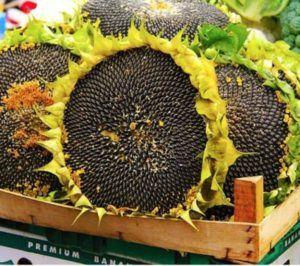 Україна лідер по вирощуванню соняшника