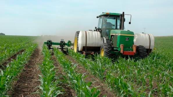Удобрения для кукурузы