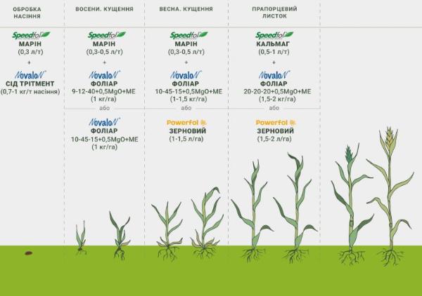 микроудобрения для пшеницы - таблица