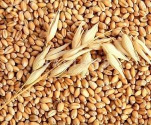 Удобрение зерновых озимых