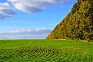 Удобрення озимих зернових