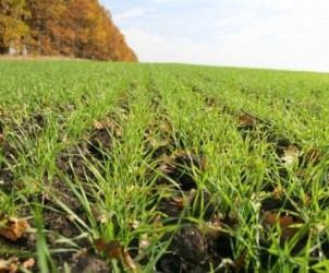 Удобрення зернових озимих