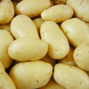 Семенной картофель Гранада (первая репродукция Германия)