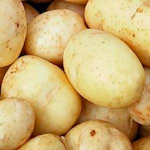 Семенной картофель Маверик (Голландия 1 репродукция)